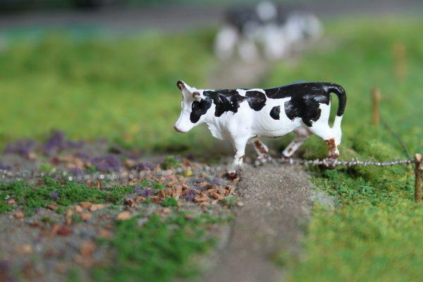 Holstein-Friesian Zwartbont