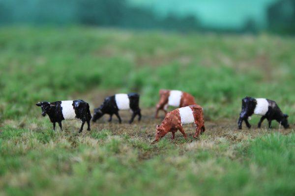 Nederlandse koeienrassen