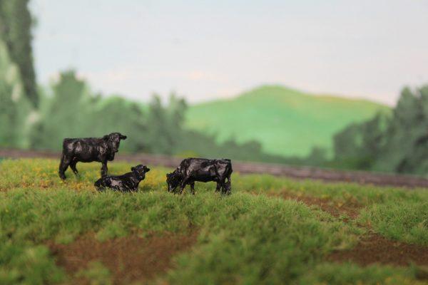Amerikaans/Engelse koeienrassen