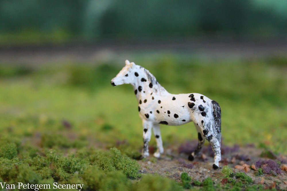1 87 american appaloosa horse joseph standing van petegem scenery